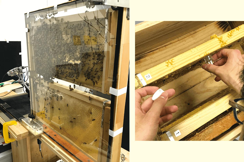 ミツバチの観察箱を用いた研究の記録やコミュニケーションにTypetalkが活用されている